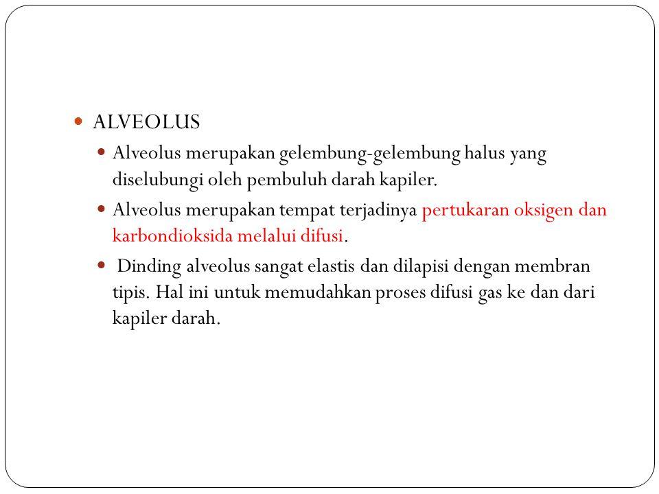 ALVEOLUS Alveolus merupakan gelembung-gelembung halus yang diselubungi oleh pembuluh darah kapiler. Alveolus merupakan tempat terjadinya pertukaran ok