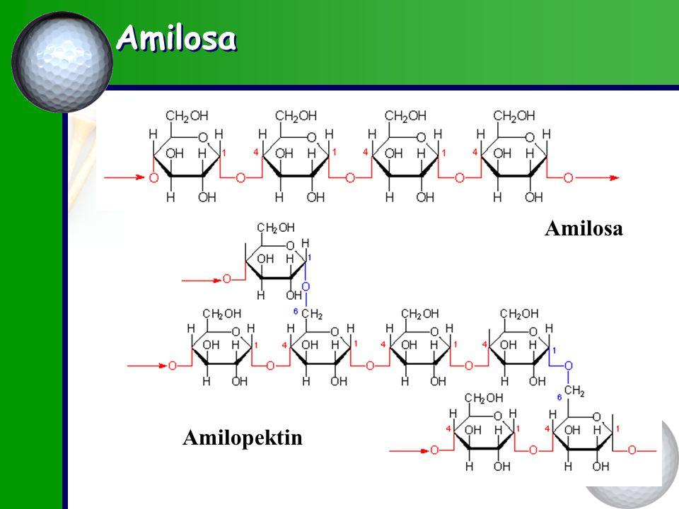 Amilosa Amilopektin