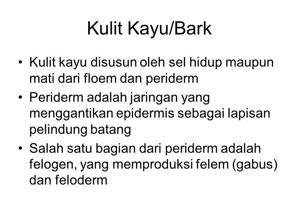 Kulit Kayu/Bark Kulit kayu disusun oleh sel hidup maupun mati dari floem dan periderm Periderm adalah jaringan yang menggantikan epidermis sebagai lap