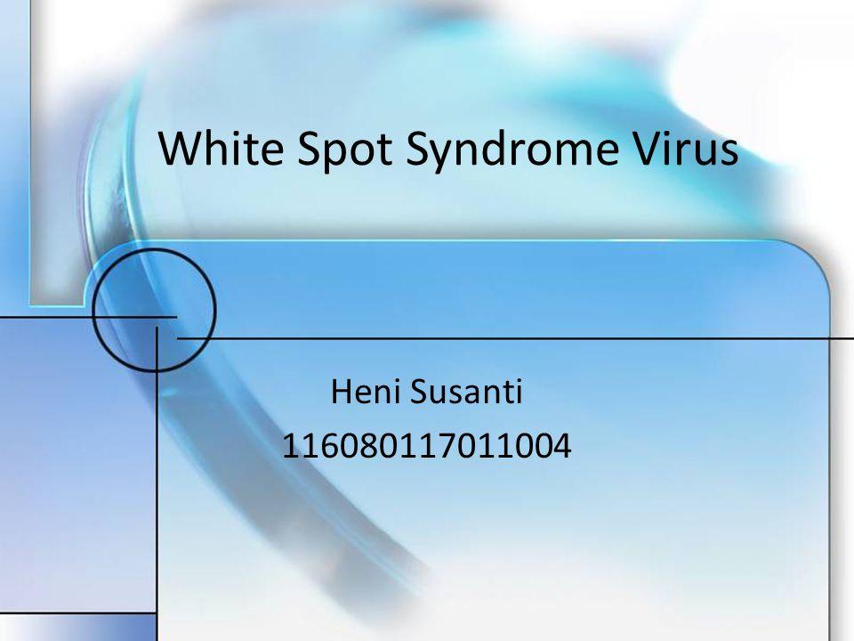infeksi WSSV adalah terjadinya perubahan seluler sehingga terjadi pembengkakan inti sel (hipertrofi) oleh karena perkembangan dan penumpukan virion yang berkembang dalam inti sel.