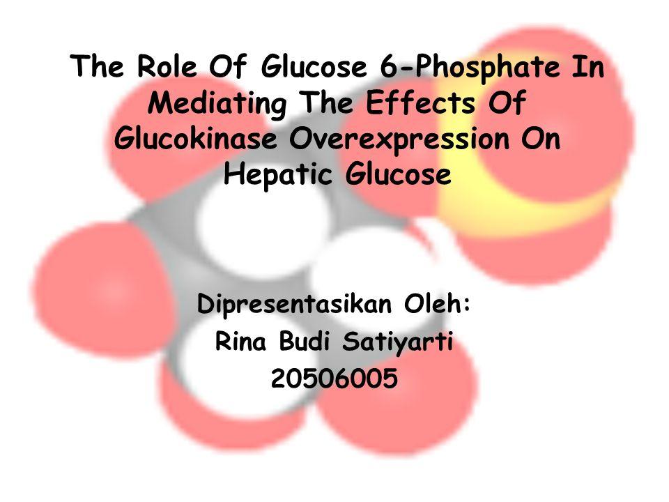Latar Belakang Overekspresi glucokinase dalam sel hepatosit menstimulasi fosforilasi glukosa, glikolisis, dan sintesis glikogen