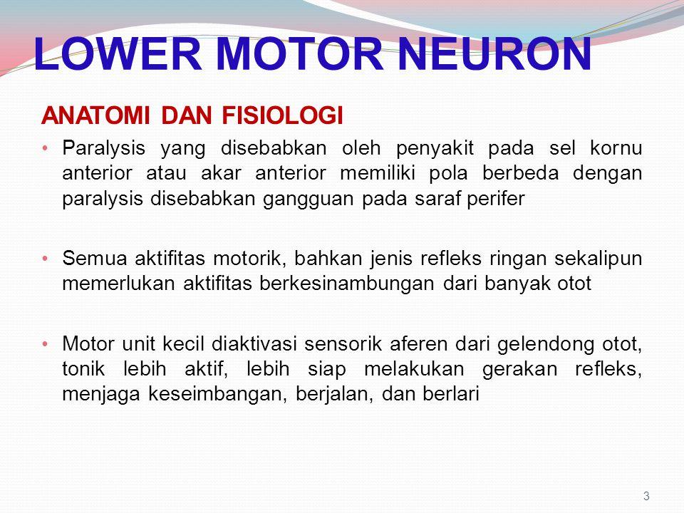 LOWER MOTOR NEURON ANATOMI DAN FISIOLOGI Paralysis yang disebabkan oleh penyakit pada sel kornu anterior atau akar anterior memiliki pola berbeda deng