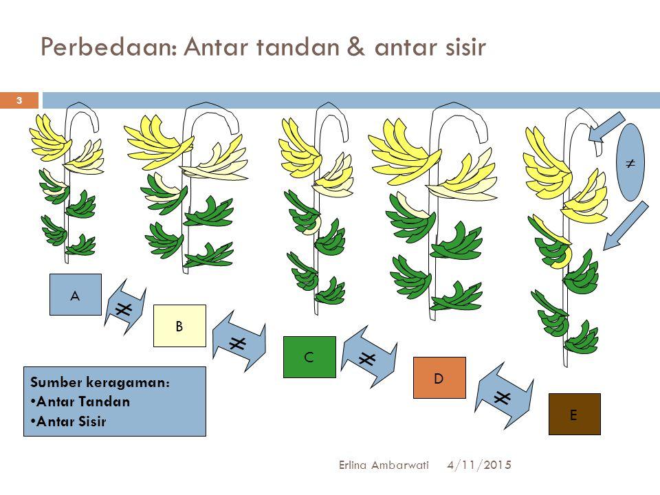 Perbedaan: Antar tandan & antar sisir A B C D E      Sumber keragaman: Antar Tandan Antar Sisir 4/11/2015 3 Erlina Ambarwati