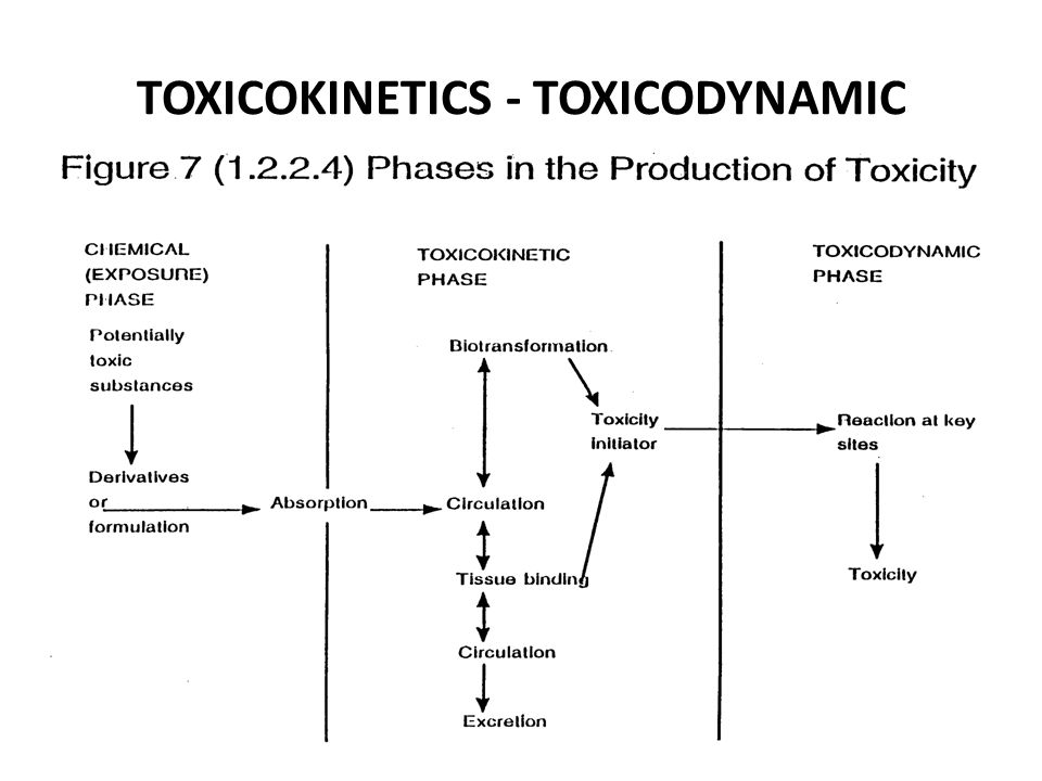 Umumnya hanya bagian zat yang berada dalam bentuk terlarut, terdispersi secara molekul yang dapat diabsorbsi.