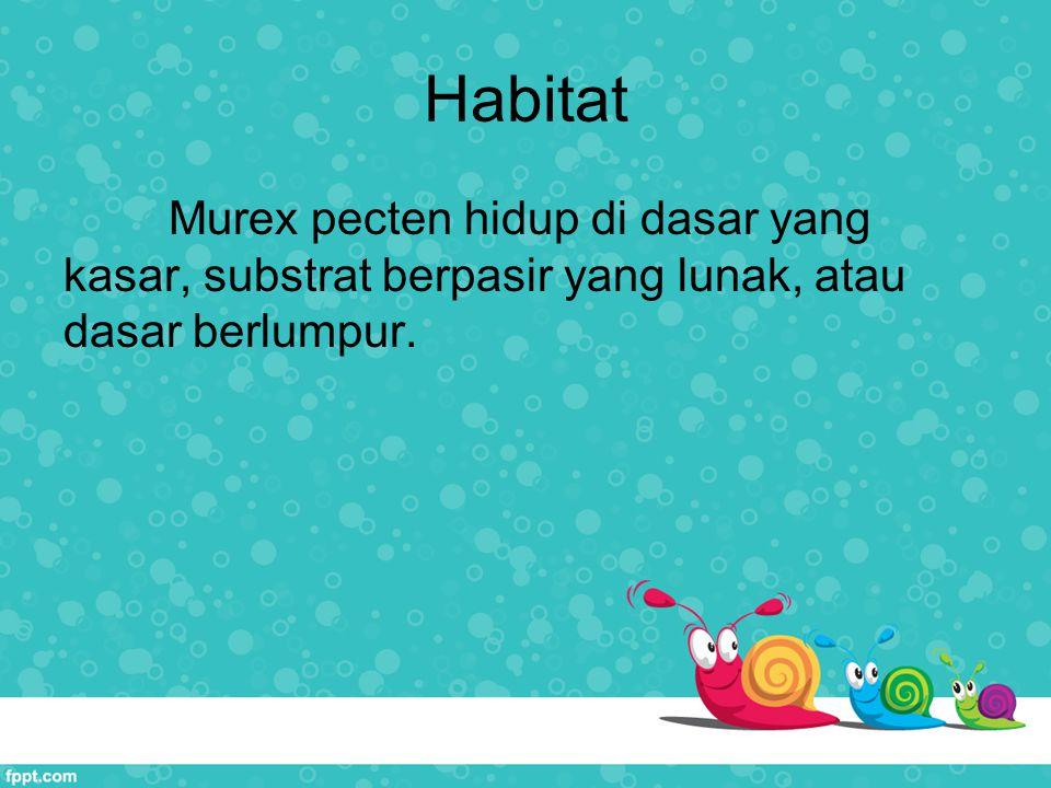 Habitat Murex pecten hidup di dasar yang kasar, substrat berpasir yang lunak, atau dasar berlumpur.