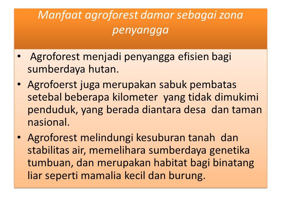 Manfaat agroforest damar sebagai zona penyangga Agroforest menjadi penyangga efisien bagi sumberdaya hutan. Agrofoerst juga merupakan sabuk pembatas s
