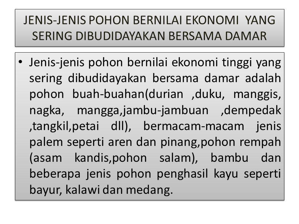 JENIS-JENIS POHON BERNILAI EKONOMI YANG SERING DIBUDIDAYAKAN BERSAMA DAMAR Jenis-jenis pohon bernilai ekonomi tinggi yang sering dibudidayakan bersama