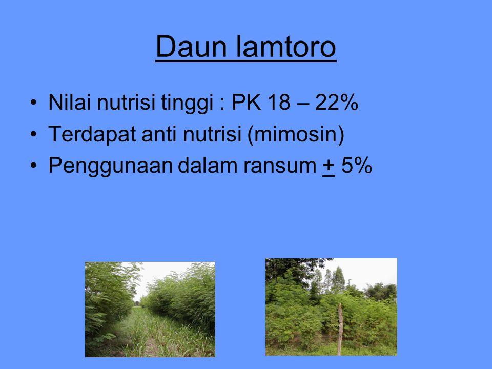 Daun lamtoro Nilai nutrisi tinggi : PK 18 – 22% Terdapat anti nutrisi (mimosin) Penggunaan dalam ransum + 5%