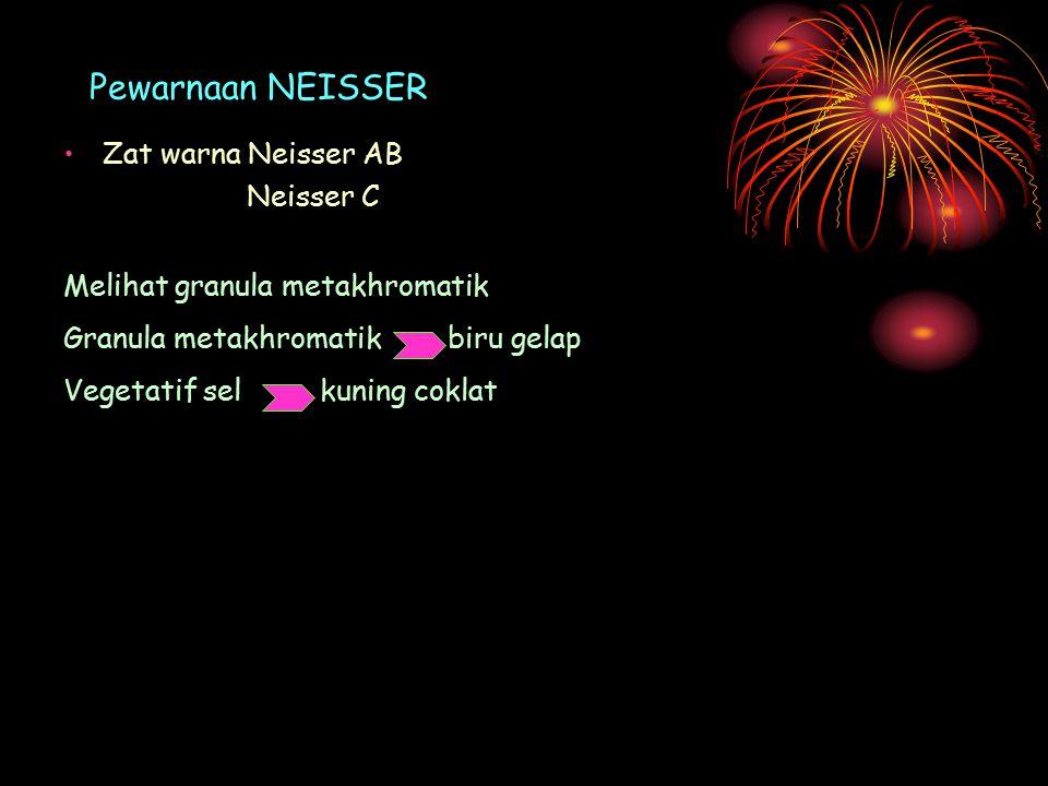 Pewarnaan NEISSER Zat warna Neisser AB Neisser C Melihat granula metakhromatik Granula metakhromatik biru gelap Vegetatif sel kuning coklat