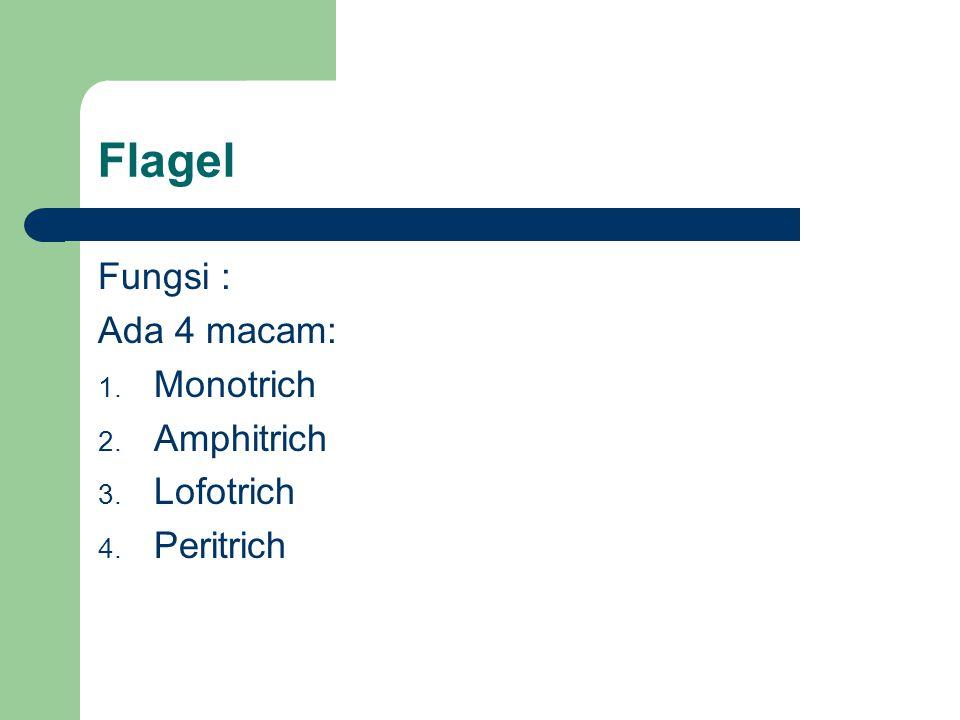 Flagel Fungsi : Ada 4 macam: 1. Monotrich 2. Amphitrich 3. Lofotrich 4. Peritrich