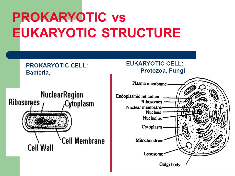 Bakteri adalah mikroorganisme prokaryot yaitu organisme yang materi intinya tidak terbungkus oleh membran.
