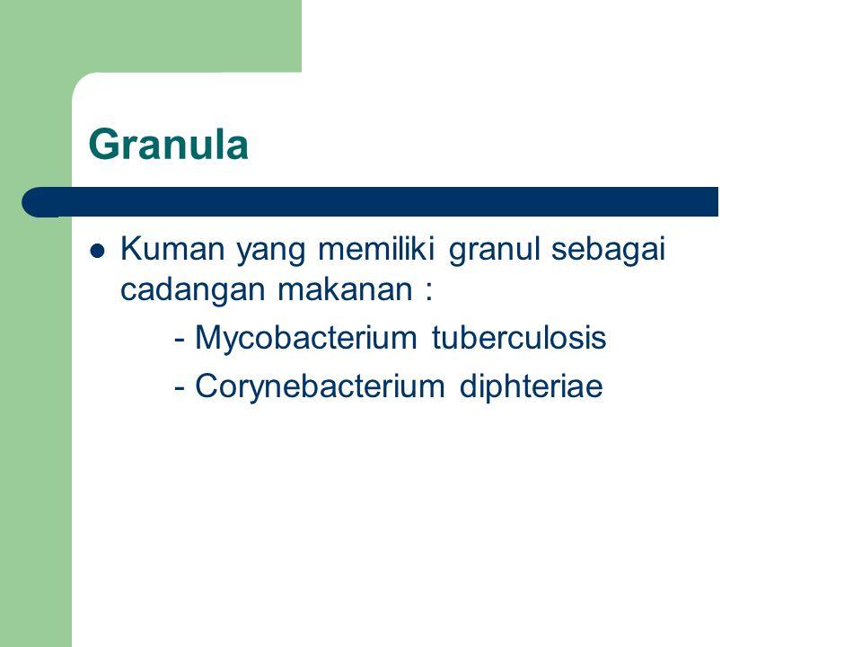 Granula Kuman yang memiliki granul sebagai cadangan makanan : - Mycobacterium tuberculosis - Corynebacterium diphteriae