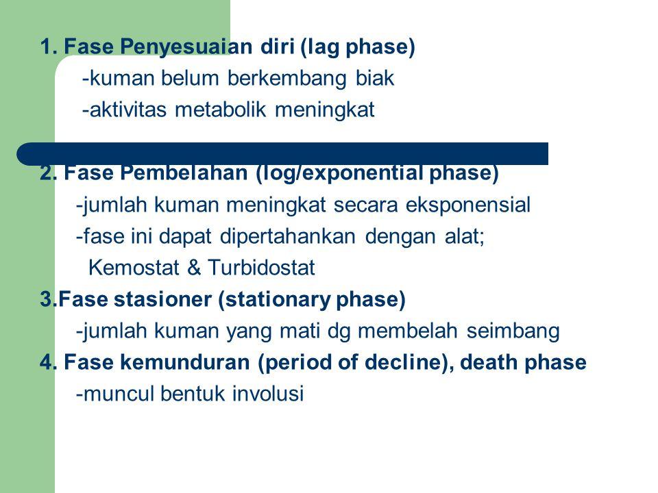 1. Fase Penyesuaian diri (lag phase) -kuman belum berkembang biak -aktivitas metabolik meningkat 2. Fase Pembelahan (log/exponential phase) -jumlah ku