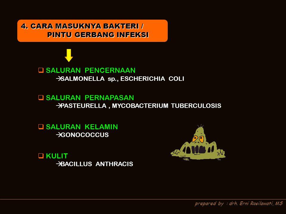 prepared by : drh. Erni Rosilawati, MS 4. CARA MASUKNYA BAKTERI / PINTU GERBANG INFEKSI PINTU GERBANG INFEKSI  SALURAN PENCERNAAN  SALURAN PERNAPASA