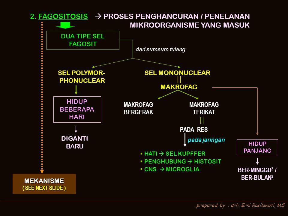 prepared by : drh. Erni Rosilawati, MS 2. FAGOSITOSIS  PROSES PENGHANCURAN / PENELANAN MIKROORGANISME YANG MASUK MEKANISME ( SEE NEXT SLIDE ) ( SEE N