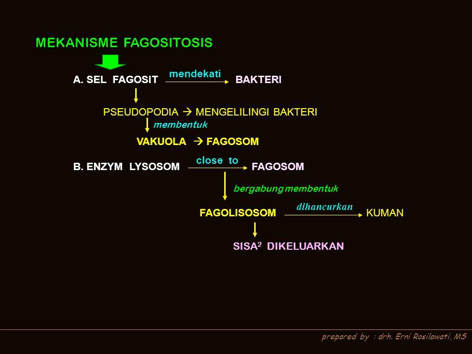 prepared by : drh. Erni Rosilawati, MS MEKANISME FAGOSITOSIS MEKANISME FAGOSITOSIS A. SEL FAGOSIT BAKTERI mendekati PSEUDOPODIA  MENGELILINGI BAKTERI