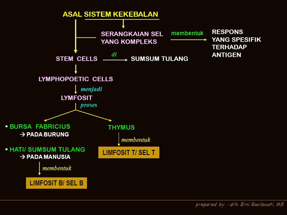 prepared by : drh. Erni Rosilawati, MS ASAL SISTEM KEKEBALAN SERANGKAIAN SEL YANG KOMPLEKS membentuk RESPONS YANG SPESIFIK TERHADAP ANTIGEN STEM CELLS
