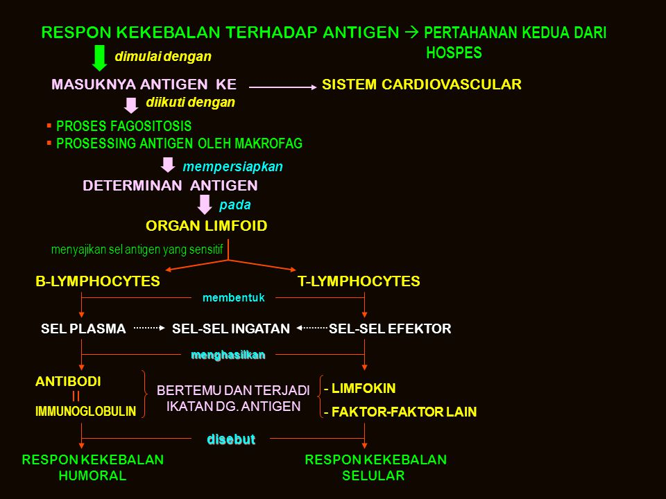RESPON KEKEBALAN TERHADAP ANTIGEN  PERTAHANAN KEDUA DARI HOSPES HOSPES dimulai dengan MASUKNYA ANTIGEN KE SISTEM CARDIOVASCULAR diikuti dengan  PROS