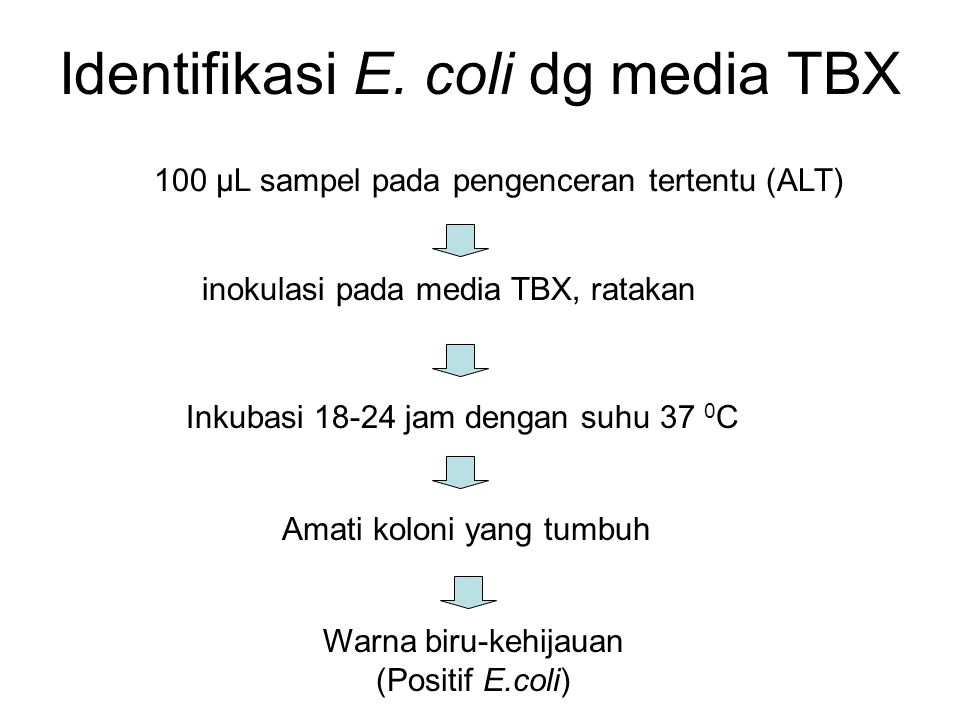 Identifikasi E. coli dg media TBX 100 µL sampel pada pengenceran tertentu (ALT) inokulasi pada media TBX, ratakan Inkubasi 18-24 jam dengan suhu 37 0