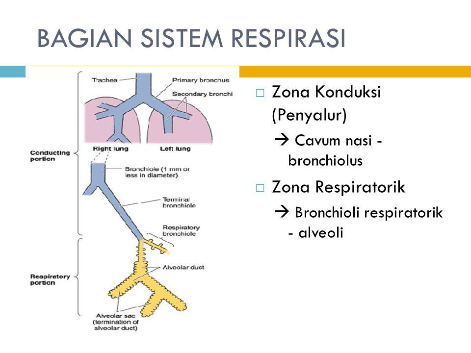 ZONA KONDUKSI Bagian dari sistem respirasi (Sistem Pernapasan Atas) yang belum terlibat dalam fungsi pertukaran udara Bersifat rigid (kaku), lumen selalu terbuka  Fungsi : menyaring, melembabkan, dan menghangatkan udara yang lewat