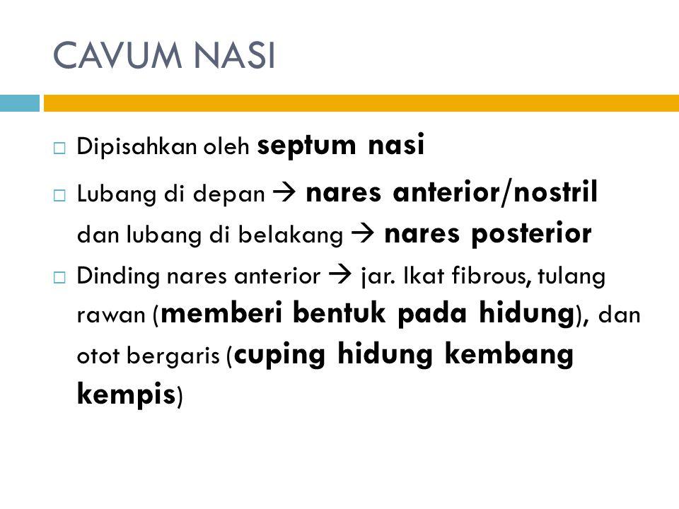  Dipisahkan oleh septum nasi  Lubang di depan  nares anterior/nostril dan lubang di belakang  nares posterior  Dinding nares anterior  jar.