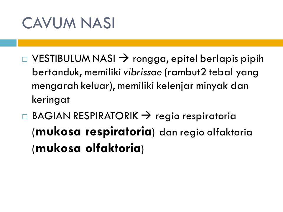 CAVUM NASI  VESTIBULUM NASI  rongga, epitel berlapis pipih bertanduk, memiliki vibrissae (rambut2 tebal yang mengarah keluar), memiliki kelenjar minyak dan keringat  BAGIAN RESPIRATORIK  regio respiratoria ( mukosa respiratoria ) dan regio olfaktoria ( mukosa olfaktoria )