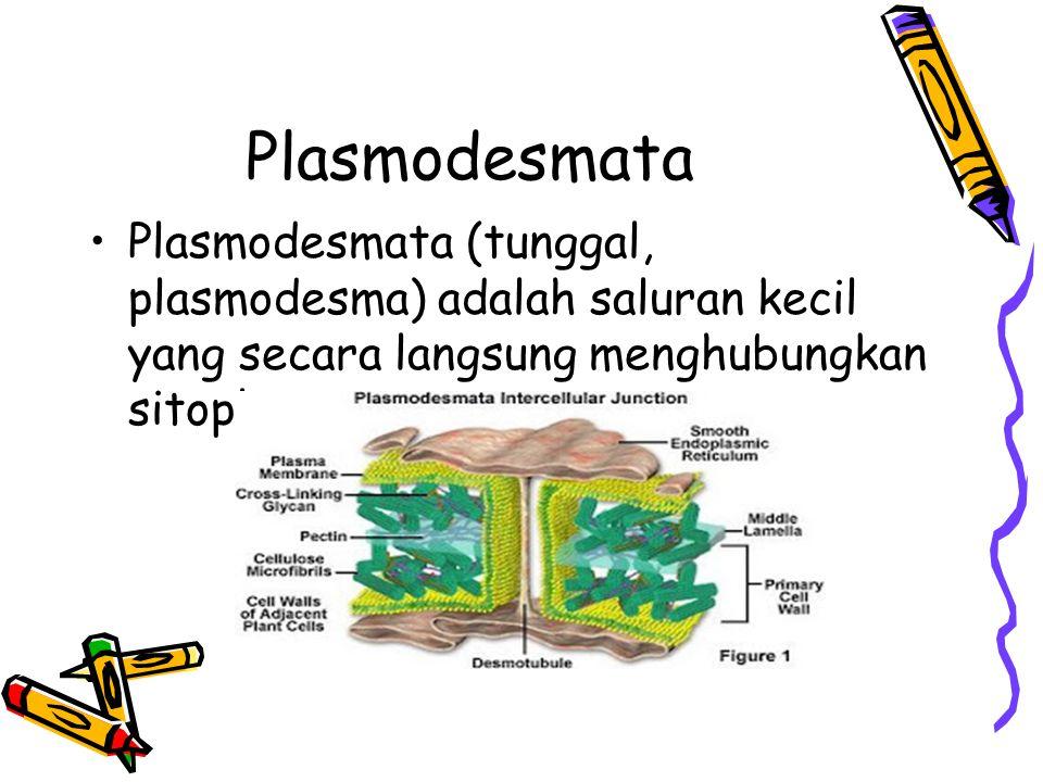 Plasmodesmata Plasmodesmata (tunggal, plasmodesma) adalah saluran kecil yang secara langsung menghubungkan sitoplasma.