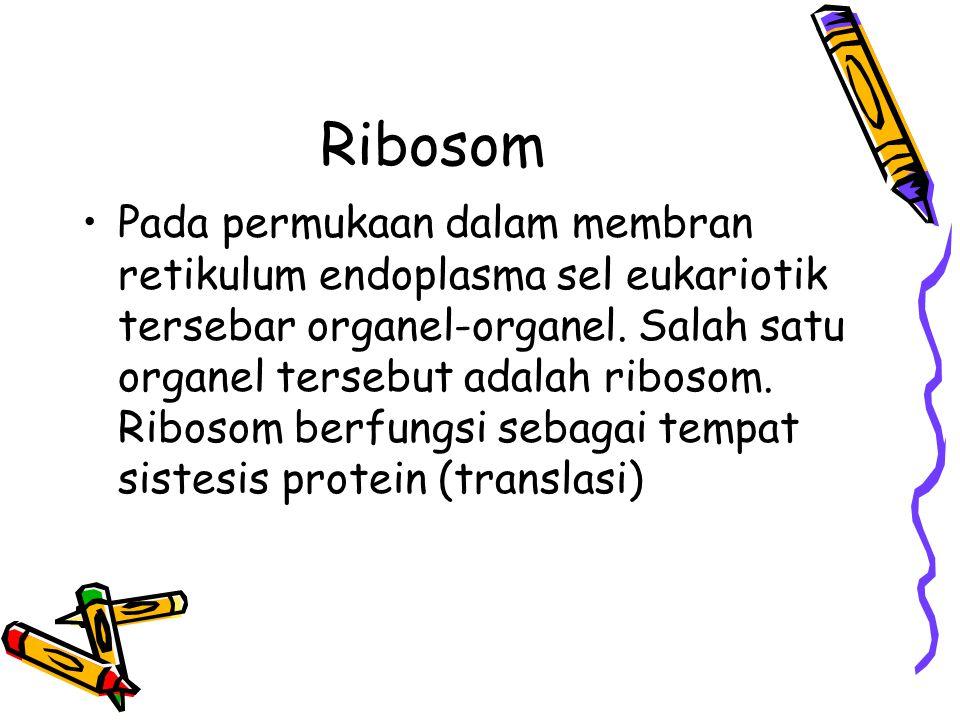Ribosom Pada permukaan dalam membran retikulum endoplasma sel eukariotik tersebar organel-organel.