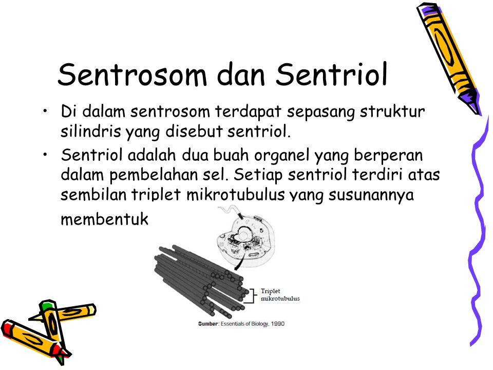 Sentrosom dan Sentriol Di dalam sentrosom terdapat sepasang struktur silindris yang disebut sentriol.