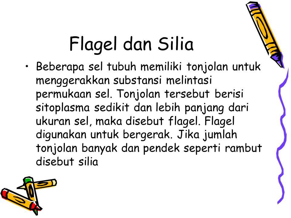 Flagel dan Silia Beberapa sel tubuh memiliki tonjolan untuk menggerakkan substansi melintasi permukaan sel.