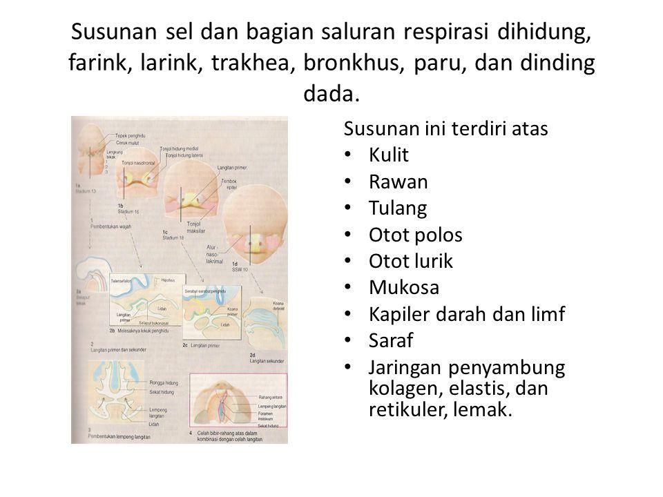 Susunan sel dan bagian saluran respirasi dihidung, farink, larink, trakhea, bronkhus, paru, dan dinding dada. Susunan ini terdiri atas Kulit Rawan Tul