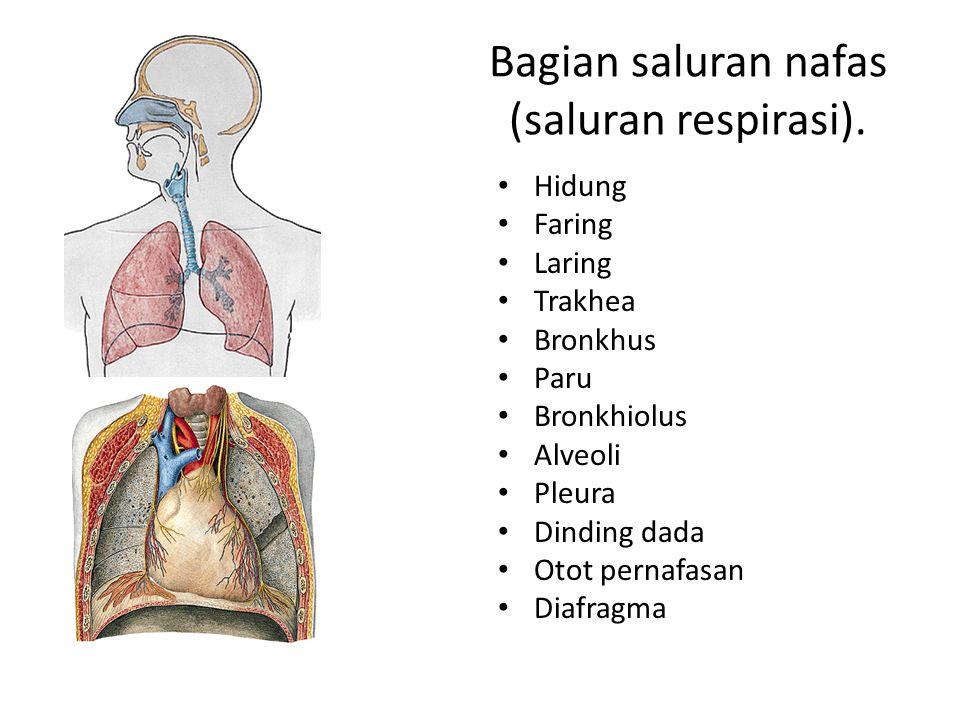 Bagian saluran nafas (saluran respirasi). Hidung Faring Laring Trakhea Bronkhus Paru Bronkhiolus Alveoli Pleura Dinding dada Otot pernafasan Diafragma