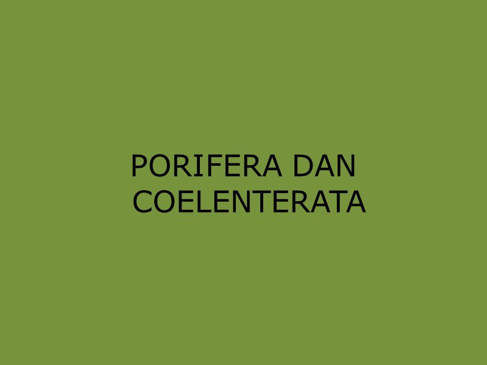 Tiga type / jenis porifera