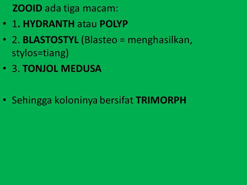 ZOOID ada tiga macam: 1. HYDRANTH atau POLYP 2. BLASTOSTYL (Blasteo = menghasilkan, stylos=tiang) 3. TONJOL MEDUSA Sehingga koloninya bersifat TRIMORP
