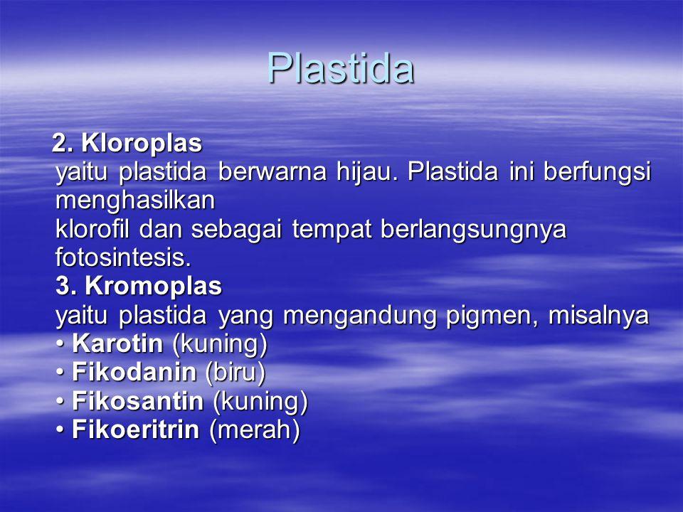 Plastida 2. Kloroplas yaitu plastida berwarna hijau. Plastida ini berfungsi menghasilkan klorofil dan sebagai tempat berlangsungnya fotosintesis. 3. K