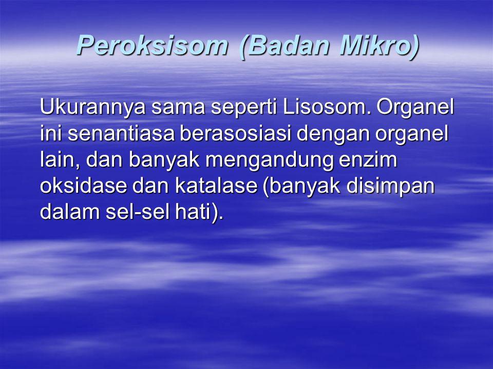 Peroksisom (Badan Mikro) Ukurannya sama seperti Lisosom. Organel ini senantiasa berasosiasi dengan organel lain, dan banyak mengandung enzim oksidase