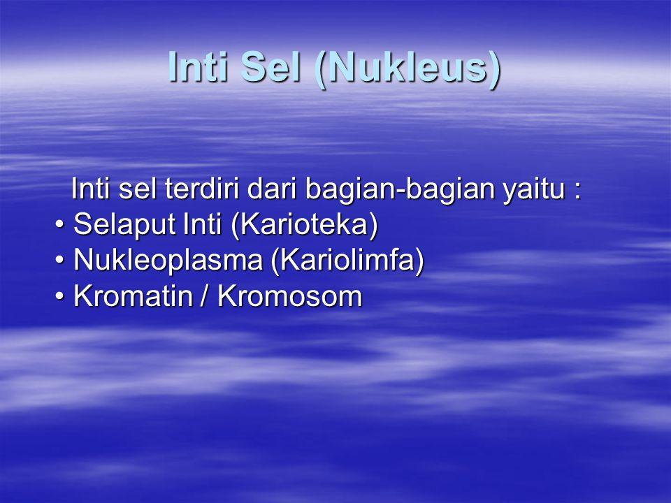 Inti Sel (Nukleus) Inti sel terdiri dari bagian-bagian yaitu : Selaput Inti (Karioteka) Nukleoplasma (Kariolimfa) Kromatin / Kromosom Inti sel terdiri