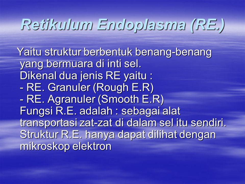 Retikulum Endoplasma (RE.) Yaitu struktur berbentuk benang-benang yang bermuara di inti sel. Dikenal dua jenis RE yaitu : - RE. Granuler (Rough E.R) -
