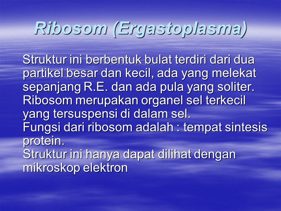 Ribosom (Ergastoplasma) Struktur ini berbentuk bulat terdiri dari dua partikel besar dan kecil, ada yang melekat sepanjang R.E. dan ada pula yang soli