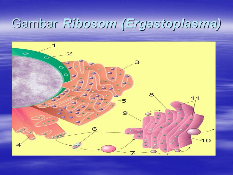 Miitokondria (The Power House) Struktur berbentuk seperti cerutu ini mempunyai dua lapis membran.