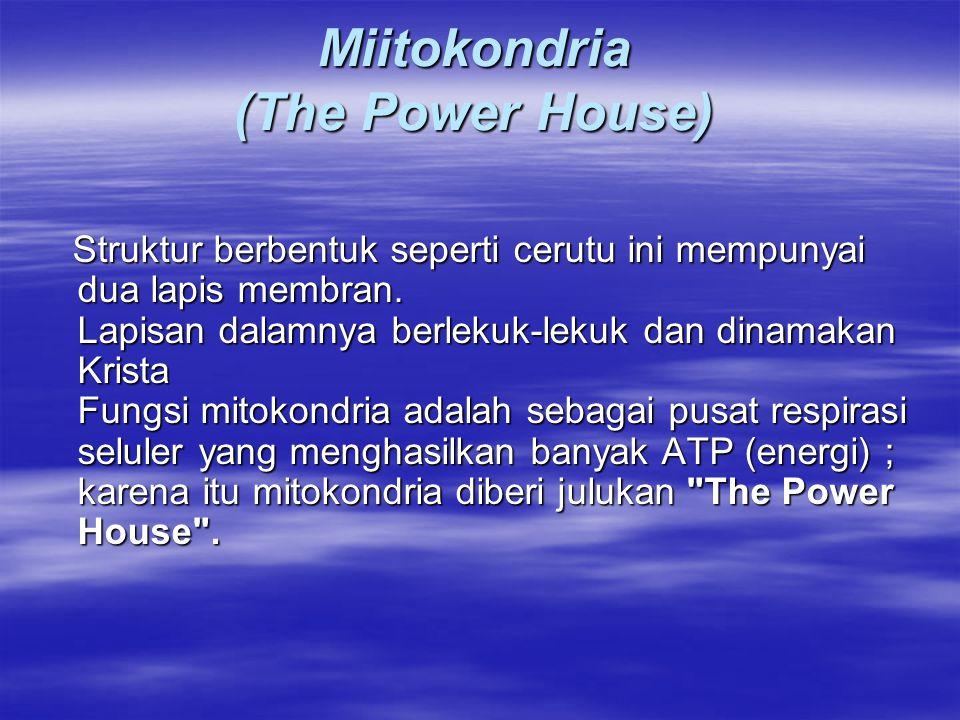 Miitokondria (The Power House) Struktur berbentuk seperti cerutu ini mempunyai dua lapis membran. Lapisan dalamnya berlekuk-lekuk dan dinamakan Krista