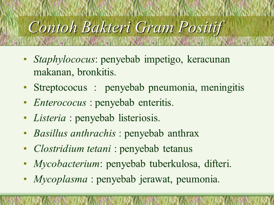 Contoh Bakteri Gram Positif Contoh Bakteri Gram Positif Staphylococus: penyebab impetigo, keracunan makanan, bronkitis. Streptococus : penyebab pneumo