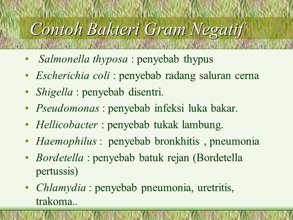 Contoh Bakteri Gram Negatif Contoh Bakteri Gram Negatif Salmonella thyposa : penyebab thypus Escherichia coli : penyebab radang saluran cerna Shigella