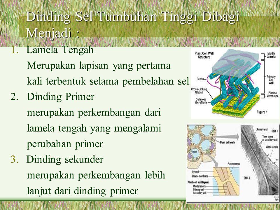 Dinding Sel Tumbuhan Tinggi Dibagi Menjadi : 1.Lamela Tengah Merupakan lapisan yang pertama kali terbentuk selama pembelahan sel 2. Dinding Primer mer