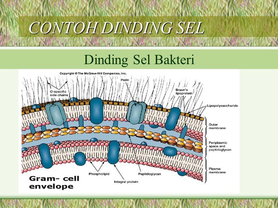 CONTOH DINDING SEL CONTOH DINDING SEL Dinding Sel Bakteri