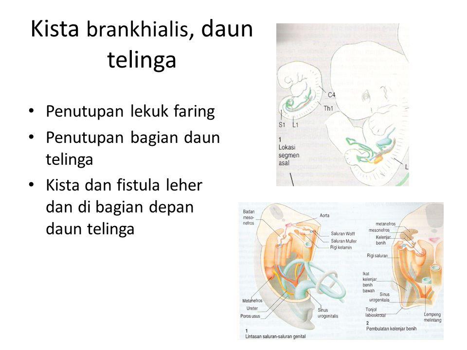 Kista brankhialis, daun telinga Penutupan lekuk faring Penutupan bagian daun telinga Kista dan fistula leher dan di bagian depan daun telinga
