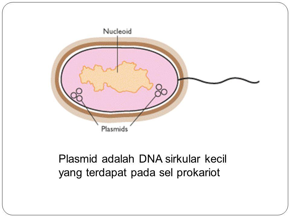 Plasmid adalah DNA sirkular kecil yang terdapat pada sel prokariot
