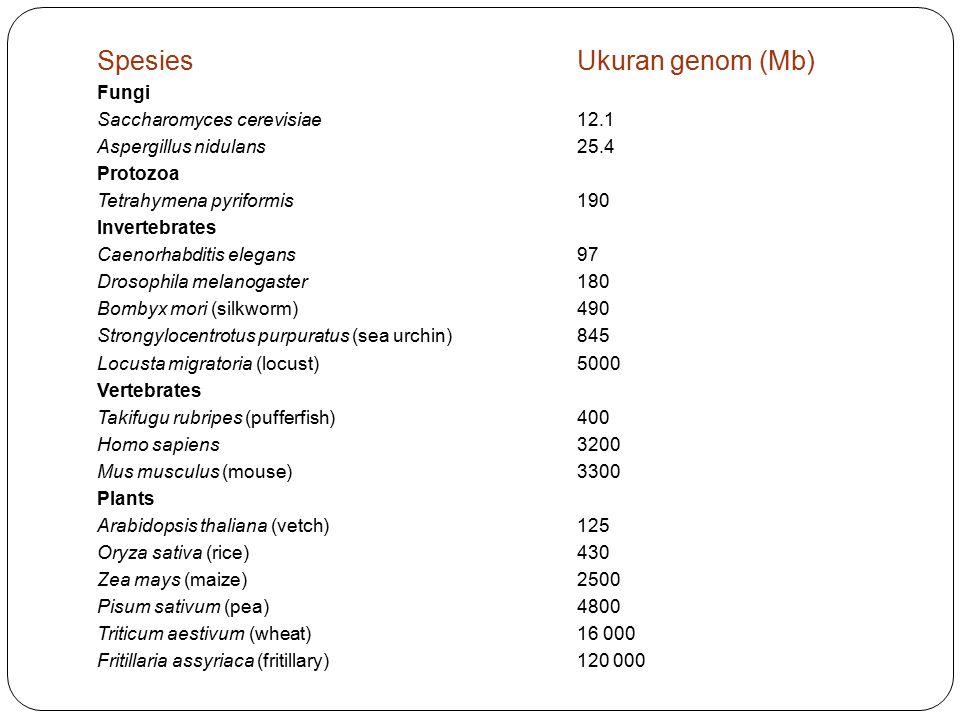 SpesiesUkuran genom (Mb) Fungi Saccharomyces cerevisiae12.1 Aspergillus nidulans25.4 Protozoa Tetrahymena pyriformis190 Invertebrates Caenorhabditis e