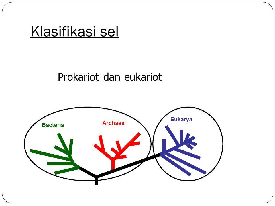 Klasifikasi sel Prokariot dan eukariot