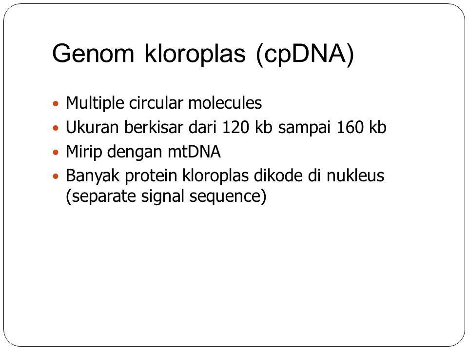 Genom kloroplas (cpDNA) Multiple circular molecules Ukuran berkisar dari 120 kb sampai 160 kb Mirip dengan mtDNA Banyak protein kloroplas dikode di nu